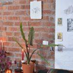 Flori de apartament rezistente la intuneric